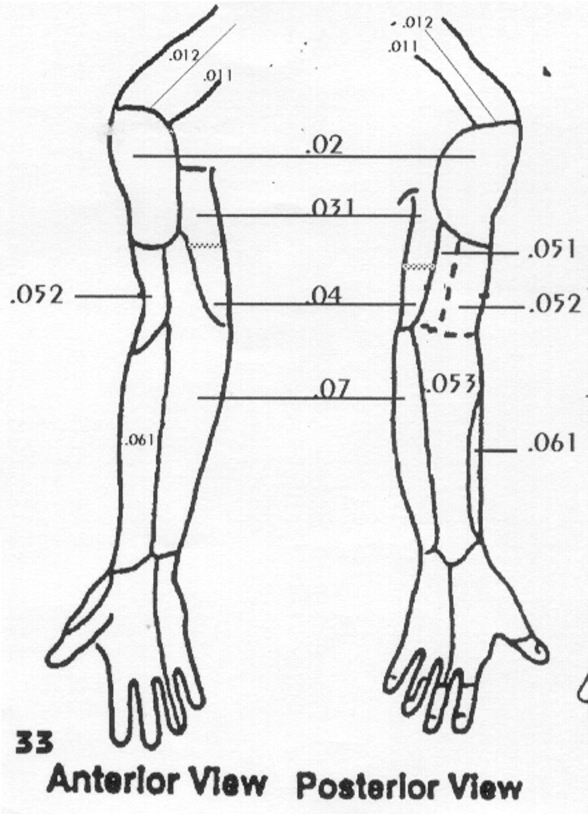 Dermatomes Hand image035 jpg