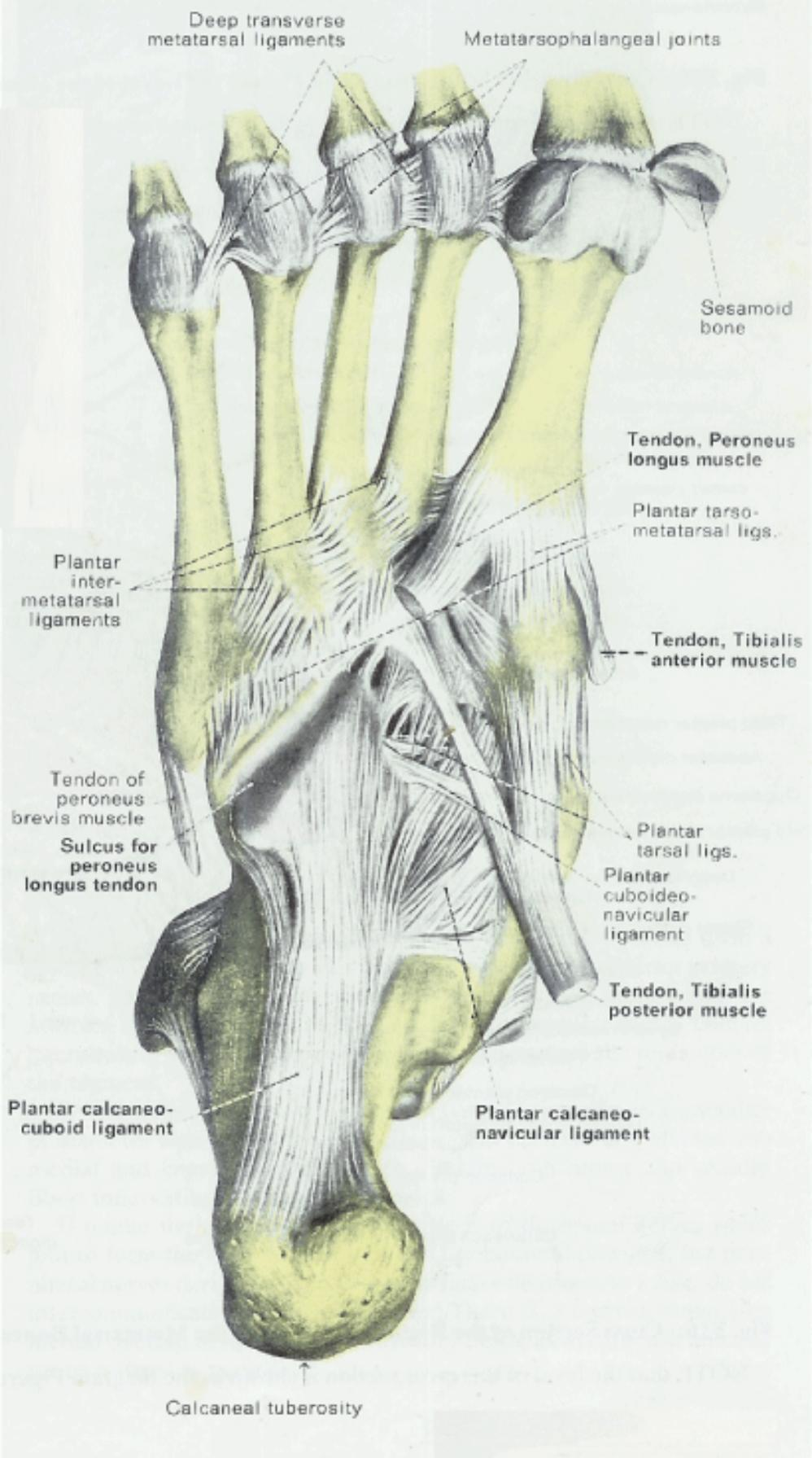Anatomy & Physiology Illustration